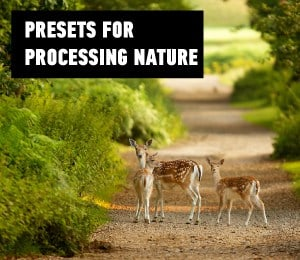 presets for processing nature