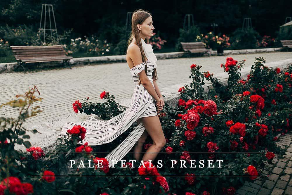 Preset Pale Petals for lightroom