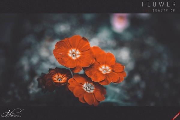 Preset Flower for lightroom